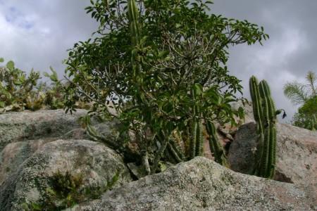 Vegetación en el Cerro Picudo
