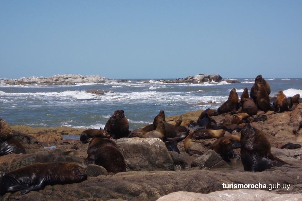 Colonia de lobos marinos en las islas frente al Cerro Verde
