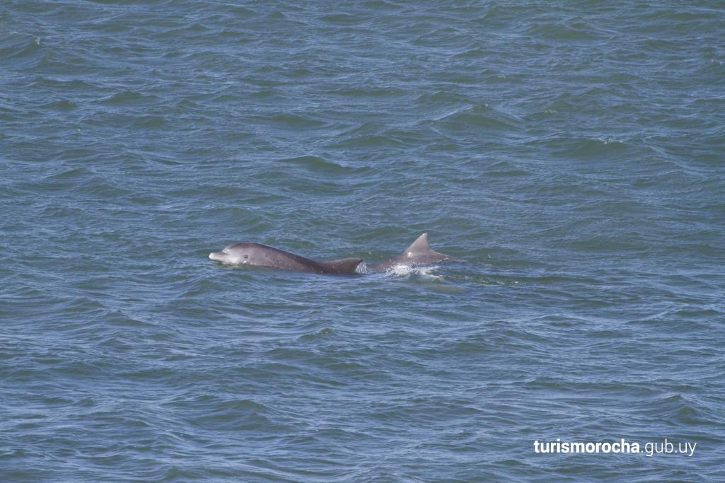 Delfines frente al Cerro Verde
