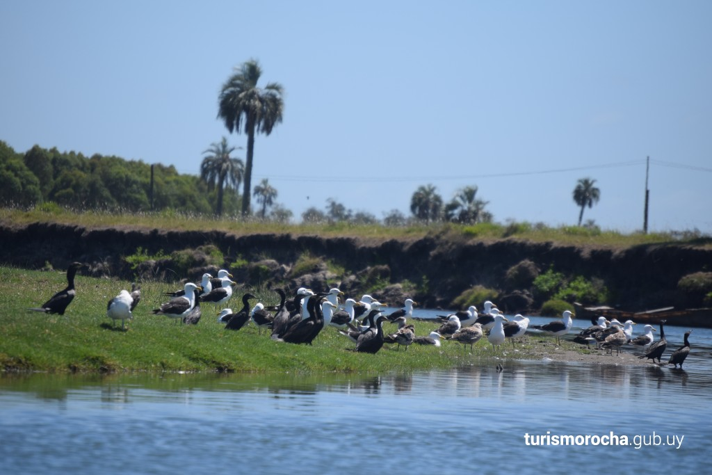 Birdwatching, Barra de Valizas