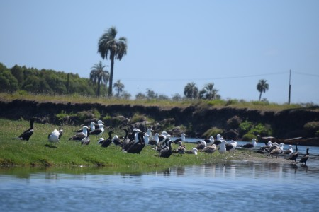 Birdwatching in lagoons, meadows, countrysides and palm groves of Rocha, Uruguay