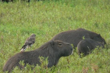 Observación de fauna autóctona
