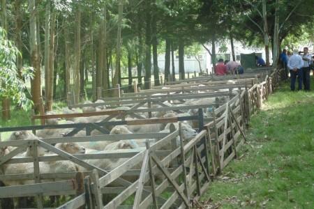 Fiesta ovina en la Sociedad Rural 19 de Abril, Rocha