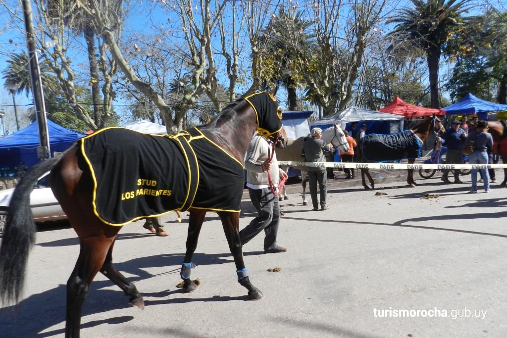 Fiesta hípica de Lascano en Lascano