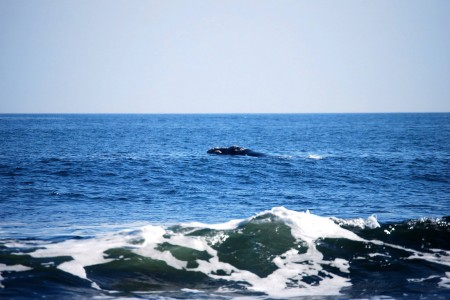 Avistamiento de ballenas en Rocha