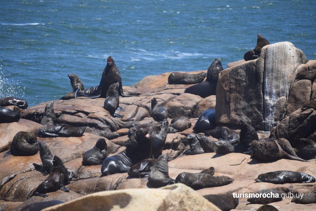 Reserva de lobos marinos, Cabo Polonio