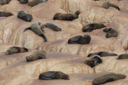 Colonia de lobos en Cabo Polonio