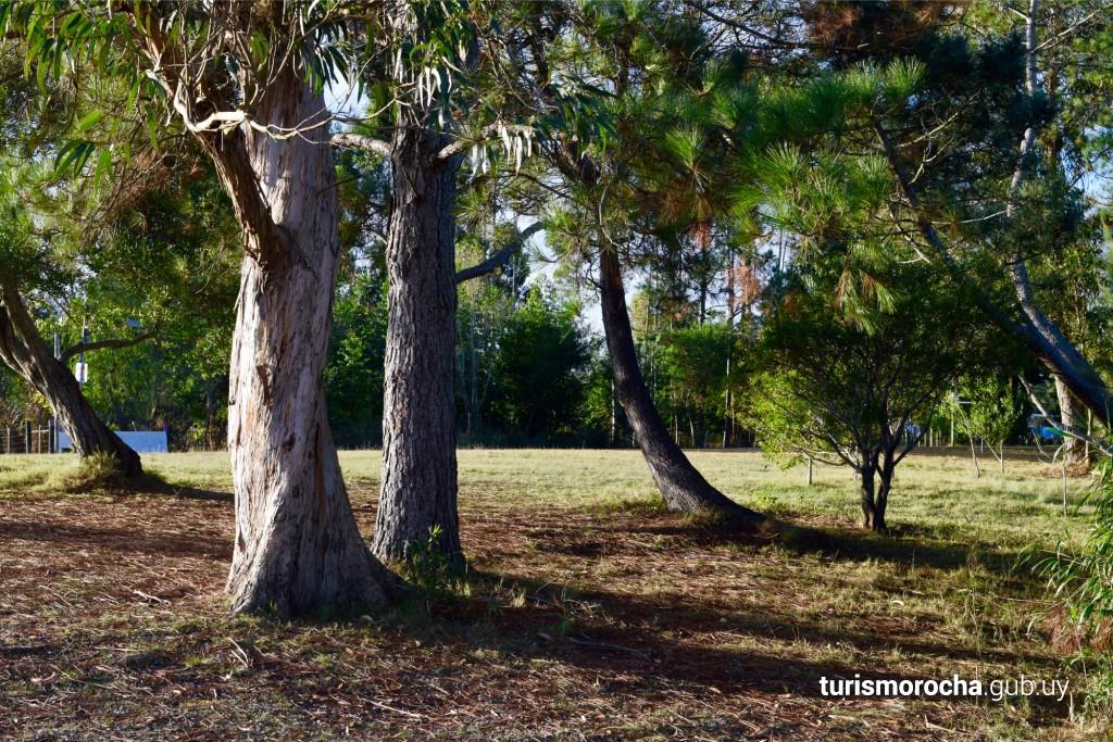 Parque de árboles