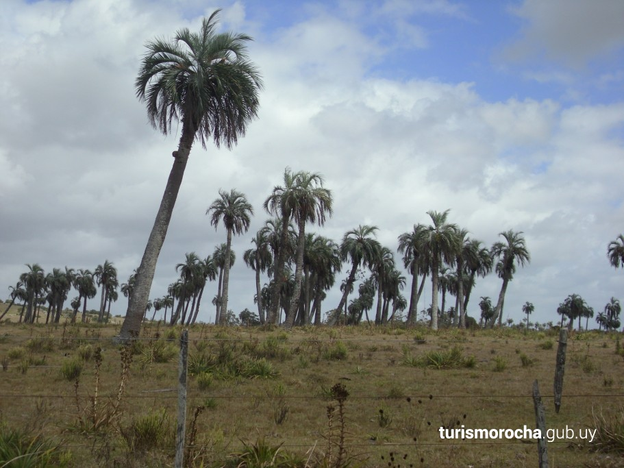 Palmares de San Luis, por ruta 19