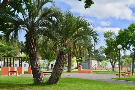 Plaza de San Luis