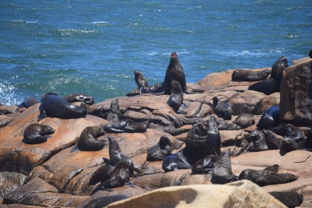 Reserva de lobos marinos