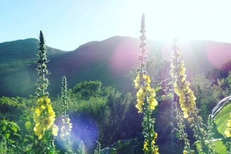 4to Encuentro de Kirtan - Sierras de Rocha en Rocha