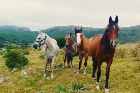 Acercamiento al mundo de los caballos en Rocha