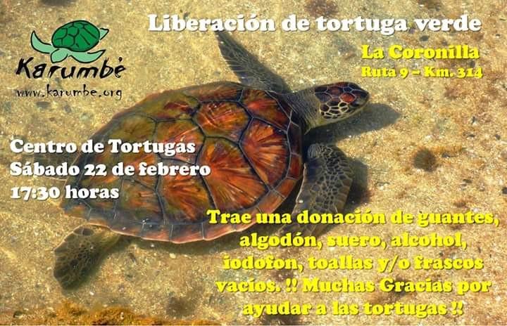 ¡Vuelve otra tortuga al mar! Liberación en La Coronilla. ¡Súmate!