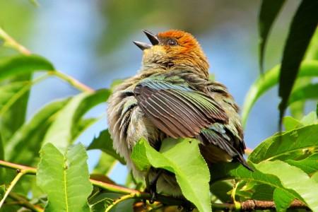 Caminata de avistaje de aves en El Caracol
