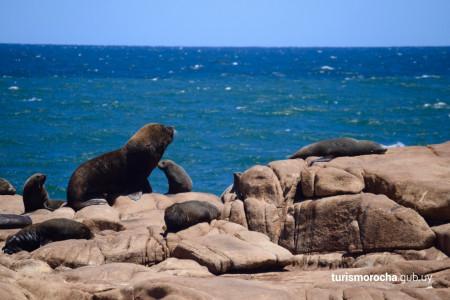 Tour al Cabo en La Paloma