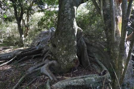 Monte de los Higuerones en La Paloma