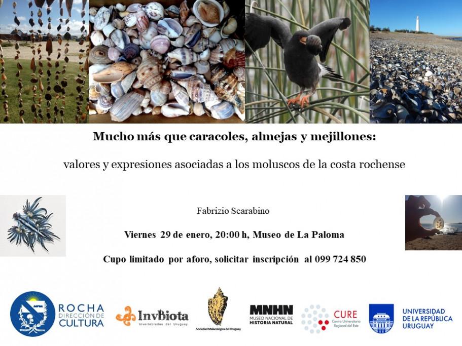 Charla sobre los moluscos de la costa rochense en el Museo de La Paloma