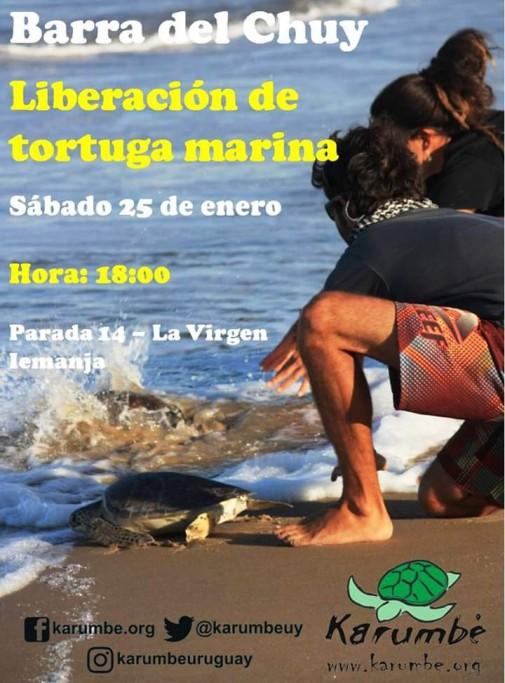 Liberación de tortuga verde en Barra de Chuy. ¡Súmate!
