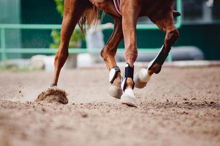 Carrera de caballos a beneficio en San Luis