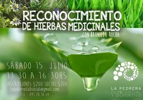 Reconocimiento de hierbas medicinales