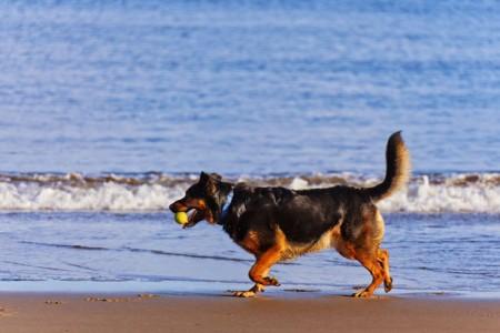 Se habilitaron playas aptas para mascotas en Rocha