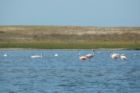 Flamencos en la Laguna de Rocha