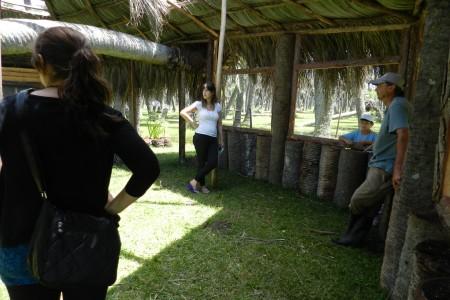 Parador ecológico en los Palmares de Rocha