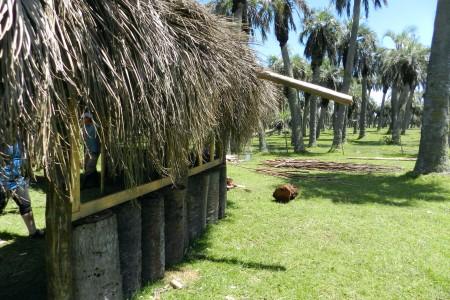 Los Palmares de Lucas: paseos y visitas guiadas por los Palmares de Rocha