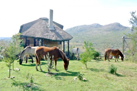 Caballos de Luz, equestrian inn, horseback riding and vegetarian food in the Sierras de Rocha, Uruguay