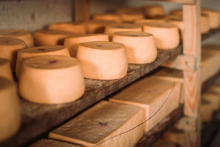 Quesos artesanales de Rocha: elaboración y proceso del tambo a tu mesa