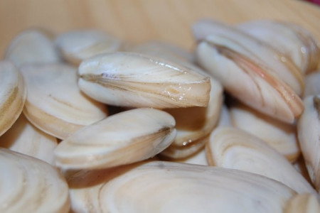 Almeja amarilla: un tesoro de mar que viste los platos de la costa de Rocha