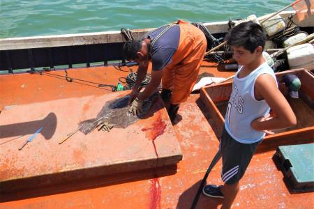 Lenguado: un pescado blanco que se destaca por su carne muy saborosa, magra, firme y delicada