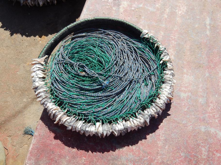 Palangre de pesca de brótola