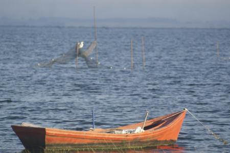 Camarón de Rocha, de los más ricos del mundo. ¿Cómo y dónde se pesca? ¿Cuándo es la zafra?