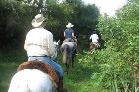 Cabalgatas con Caballos del Este