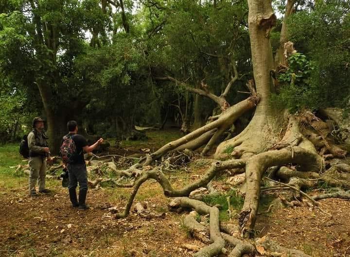 Paseo por el Bosque de Ombúes en La Barra Grande