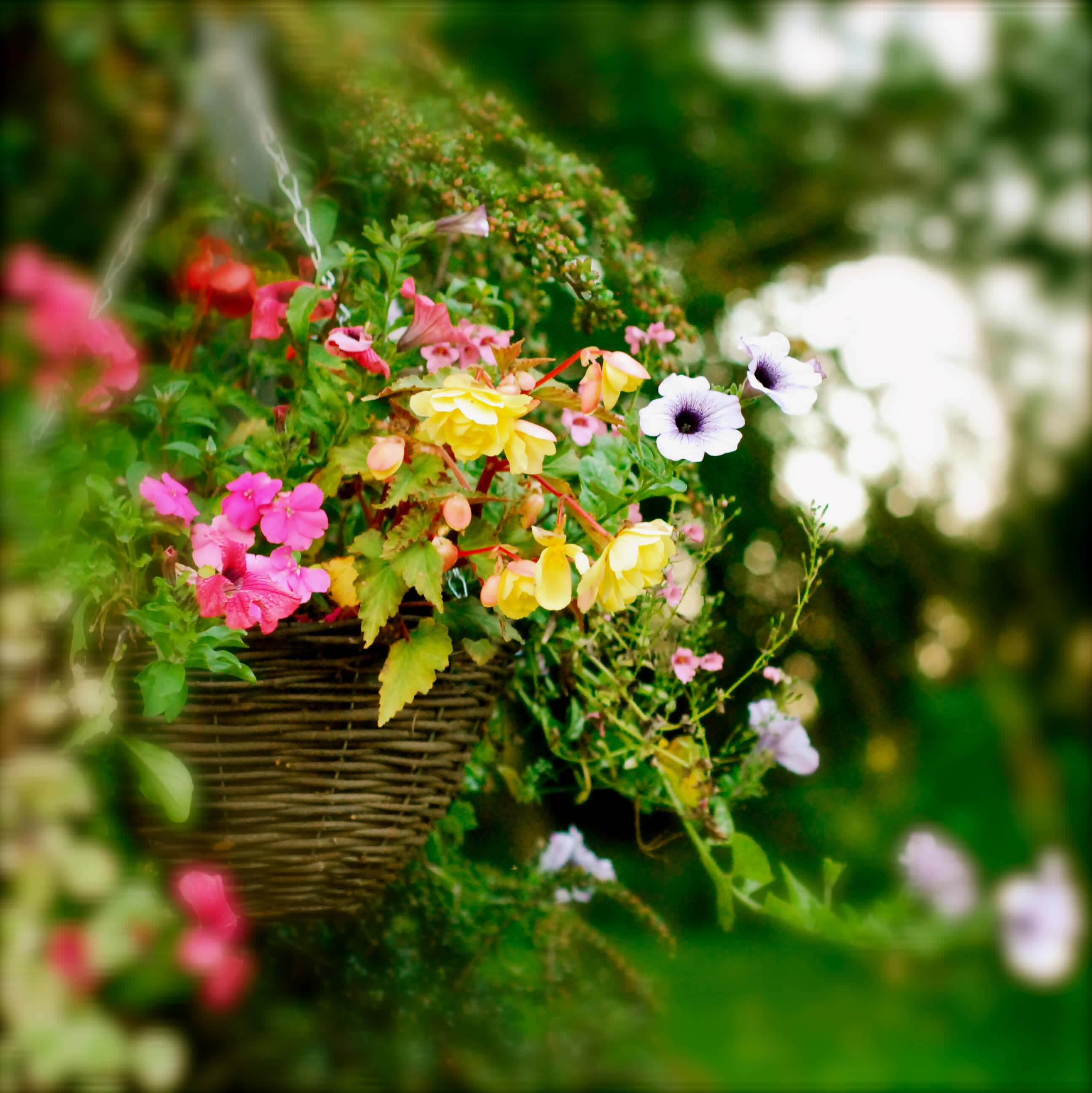 Beautify the front view of your house with hanging flower baskets