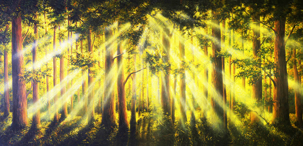 Tranquil Woods Sunrise