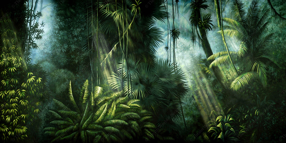 Jungle Daybreak