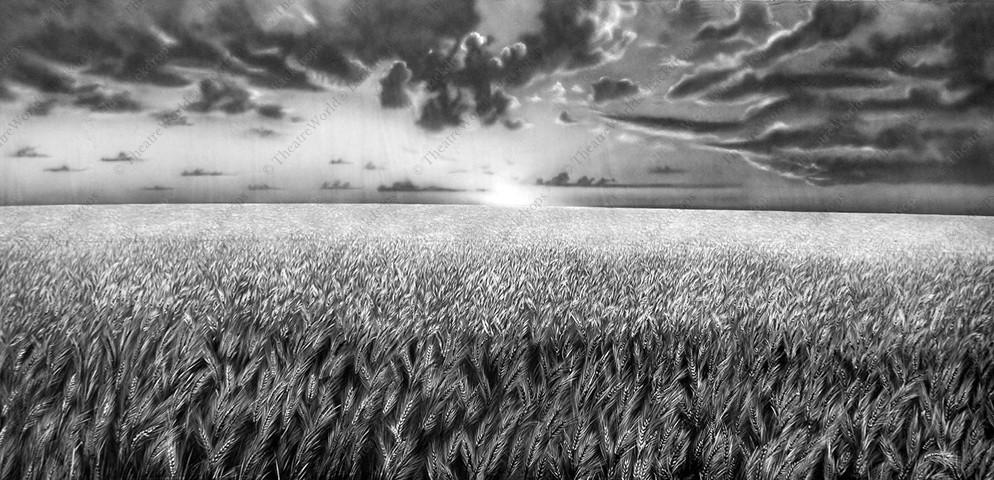 Black and White Wheatfield