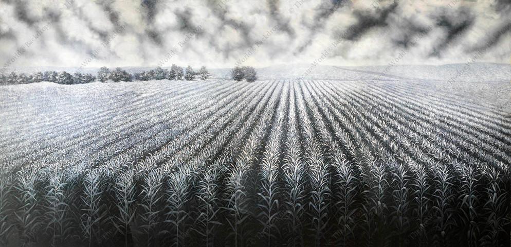 Black and White Cornfield