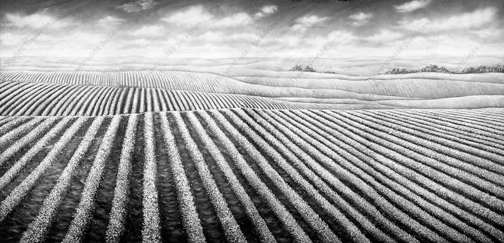 Black and White Soybean Field