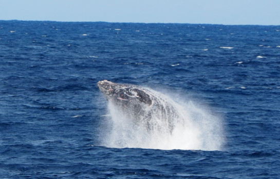 Long weekend: Whale watching on the Gold Coast