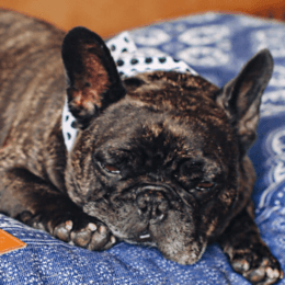 Pamper your pooch with puppy accessories from Bones Society
