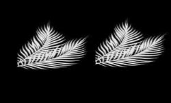 Palmsunday_thumb-medium