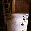 Lumberton_bathroom%20floor-thumb