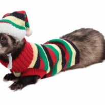 Marshall Ferret Hat and Sweater Set