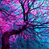 purple tree XII Art Print by blackpool