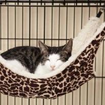 Cat Ferret Cage  Bed